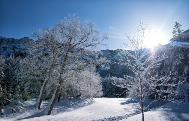 雪国生まれです。
