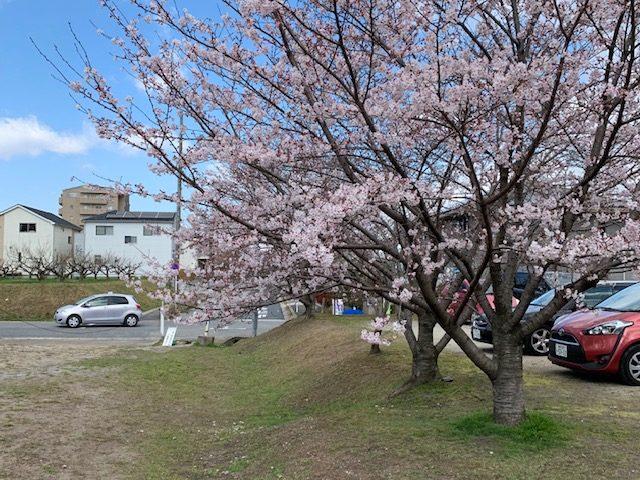 4月のテーマは《さくら》~桜の樹の下で~